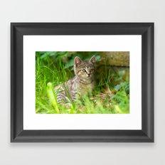 Sweet Baby Tiger Framed Art Print