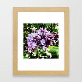 Lilac Luster Framed Art Print