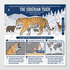 The Wild Ones: Siberian Tiger (info) Canvas Print