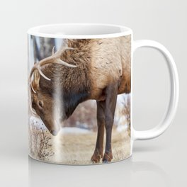 ELK IN RUT COLORADO ROCKY MOUNTAIN NATIONAL PARK WILDLIFE NATURE PHOTOGRAPHY Coffee Mug