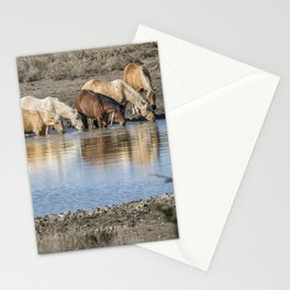 Bachelor Band at the Waterhole Stationery Cards
