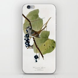 White-crowned Sparrow iPhone Skin