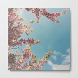 Cherry Blossom Delight Metal Print