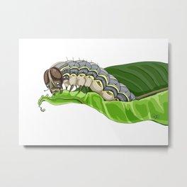The Smol Hungry Caterpillar (Armyworm) Metal Print