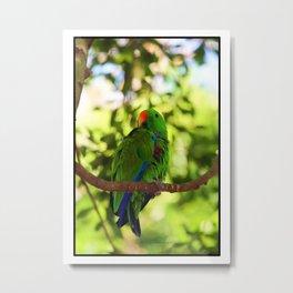 Painted Electus Parrot Metal Print