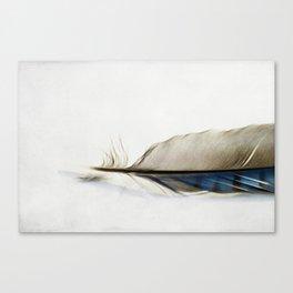 Blue Jay Feather Canvas Print