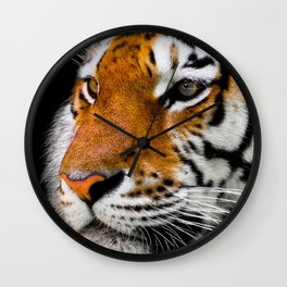 Cute close-up picture of tiger on black background Wall Clock