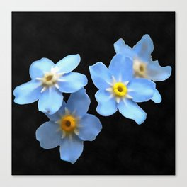 Forget Me Nots Remembrance Flowers On Black Background Canvas Print