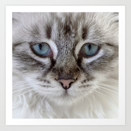Cat with Blue Eyes Art Print