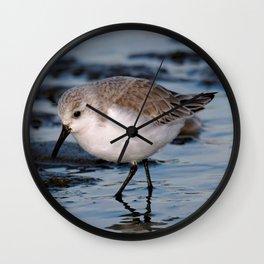 A Strolling Sanderling Wall Clock