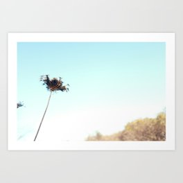 Cool Calm Collected Days Art Print