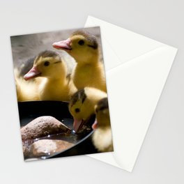 Yellow Muscovy duck ducklings Stationery Cards