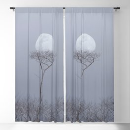 Moonrise Over An Albizia Forest Blackout Curtain