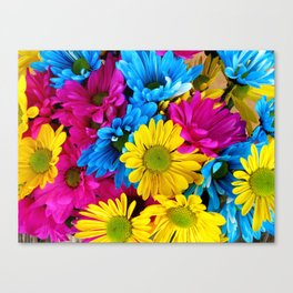 Daisy Flowers, Petals, Blossoms - Blue Yellow Pink Canvas Print