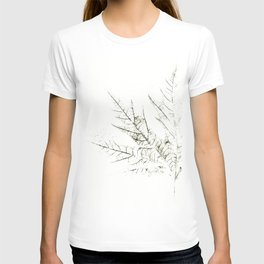 Maple Leaf Silhouette On  White Background T-shirt