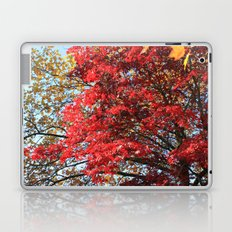 Fall maple trees of red leaves, in blue sky.  nature landscape photography. Laptop & iPad Skin