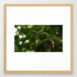 "Pair of parrots ""interrupt the moment"" Framed Art Print"