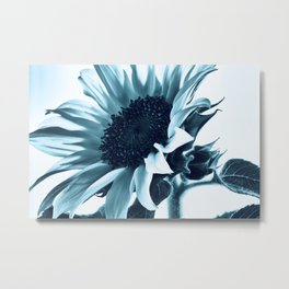 Pastel Blue Sunflower Metal Print