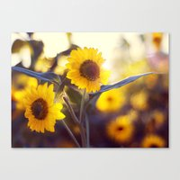 sunflowers Canvas Prints featuring Sunflowers by elle moss