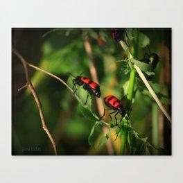 back 2 bug Canvas Print