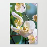 orchid Canvas Prints featuring Orchid by Joke Vermeer