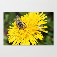 Bees tongue Canvas Print
