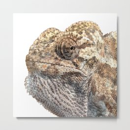 Chameleon With Sinister Facial Expression Isolated Metal Print