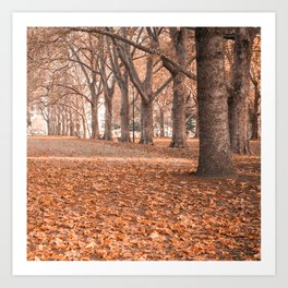 Autumn in Melbourne Art Print