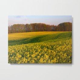 Blooming in yellow 8 Metal Print