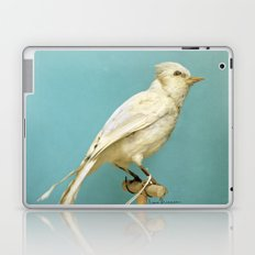 Albino Blue Jay - Square Format Natural History Bird Portrait Laptop & iPad Skin