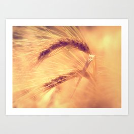 Summer romance in the grain field Art Print