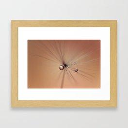 Fragile Dandelion Framed Art Print