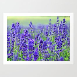LAVENDER FIELD OF HAPPINESS Art Print