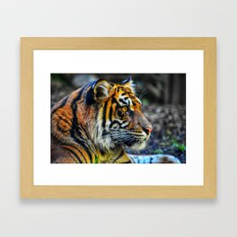 Rainbow Cat Framed Art Print