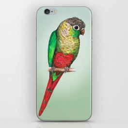 Conure with a heart on its belly iPhone Skin