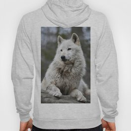 Alawa Rests on a Rock Hoody
