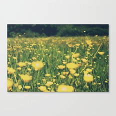 Field of yellow Canvas Print