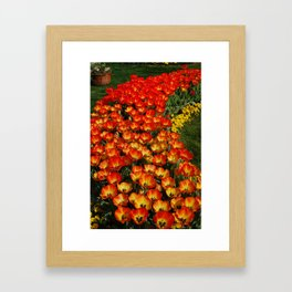 Tulips of Red and Yellow Framed Art Print
