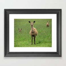 Young Deer Framed Art Print