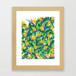 Summer Strelitzia Framed Art Print
