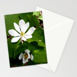 Bloodroot Blossoms 2 Stationery Cards