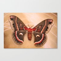 moth Canvas Prints featuring Moth by KunstFabrik_StaticMovement Manu Jobst