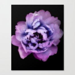 Indulgent Darkness, Purple Peony Canvas Print