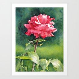 Rose watercolor painting Art Print