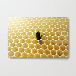 Bee in the honeycomb Metal Print