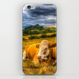 Resting Cows iPhone Skin