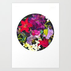 Black Parrot Tulips Art Print