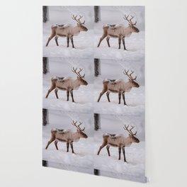 Little reindeer in the snow Wallpaper