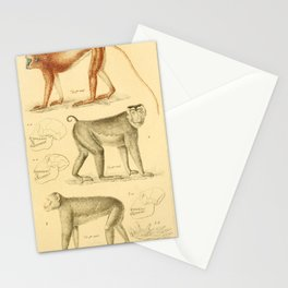 Vintage Animal Illustration - 1829 - Gray Langur, Pigtail Macaque & Barbary Macaque Stationery Cards