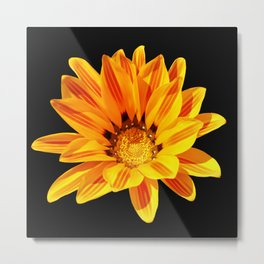 Floral Beauty in Close Up Metal Print